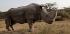 The Last Male Northern White Rhino Is Dead