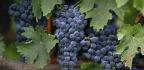California Farmers, Winemakers Kick Dirt Over Chinese Tariffs