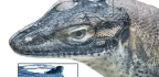 4-eyed Lizard May Offer Clues About Evolution