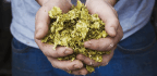 GMO Yeast Mimics Flavors Of Hops, But Will Craft Brewers Bite?