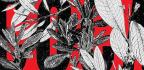 Bolivia's Quest To Spread The Gospel Of Coca