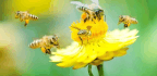 Saving Pollinators Is About More Than Just Honeybees