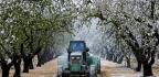 Raids And Tariffs? We'll Take Our Lumps, Say California Farmers