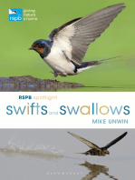 RSPB Spotlight Swifts and Swallows