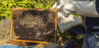 A Sting-free Guide To Becoming A DIY Beekeeper
