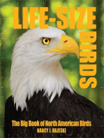 Life-Size Birds