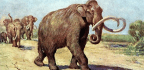 In Search of the Great Wooly Mammoth