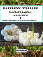 Grow your Garlic at Home + Health Benefits of Eating Garlic