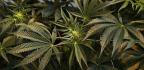 San Francisco Will Use New Technology To Automatically Reduce Marijuana Convictions