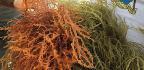 Warming Waters Hurt Zanzibar's Seaweed. But Women Farmers Have A Plan.