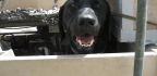 Meet The U.S. Military Dogs Being Honored For Their Service Overseas