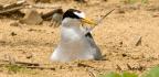 Between Two Terns