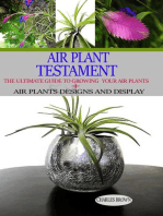Air Plant Testament