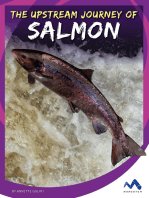 The Upstream Journey of Salmon