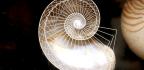 The Nautilus's Impressive Memory Has Survived Five Mass Extinctions