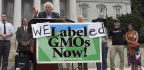 Does GMO Labeling Actually Increase Support for GMOs?