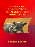 A Bizarre Collection of Male Cow's Doodah's
