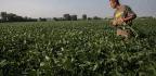 Illinois Farmers Welcome $12 Billion In Aid, But Prefer Trade