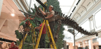A Behind-the-Scenes Peek at the Smithsonian's New Dinosaur Hall