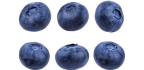 Blueberry Earth