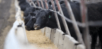 Trade War Another Blow For US Beef Exporters Trying To Regain Foothold In China