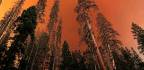 Fighting A Fire With Live Intelligence From The Sky