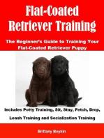 Flat-Coated Retriever Training