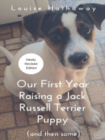 Our First Year Raising a Jack Russell Terrier Puppy (And Then Some)