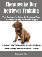 Chesapeake Bay Retriever Training