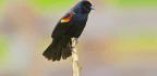How To Decode The Secret Language Of Birds