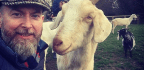 Goats Might Prefer A Smile To A Frown, Study Says