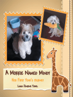 A Morkie Named Mindy
