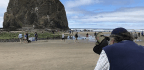 Rediscovering Haystack Rock With An Assist From The 'Puffin Man'