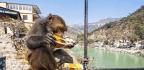 In Lab Turned Casino, Gambling Monkeys Help Scientists Find Risk-Taking Brain Area
