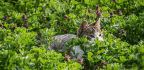 London Police Outfoxed, Abandon 3-Year Search For Serial Cat Killer