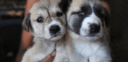 Puppies Are Making People Sick — And It's People's Fault