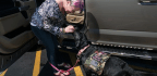 Veterans Struggling After Sexual Assault Increasingly Turn To Service Dogs