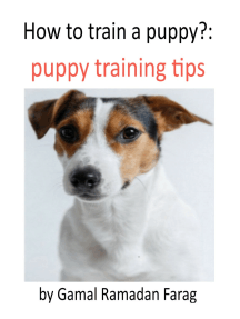 How To Train A Puppy?:Puppy Training Tips
