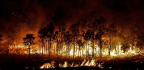 Why Controlled Burns Could Save Forests, And Lives