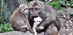 Primate Social Lives Are More Complex Than You Might Think