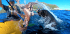 Why Did An Octopus-Wielding Sea Lion Slap A Kayaker In The Face?