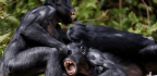 What Bonobos Can Teach Us About Sexual Assault