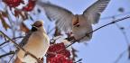 Drunk Birds Are Wreaking Havoc In Minnesota