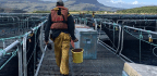 Scotland's $2 Billion Salmon Industry Is Thriving — But At What Cost?
