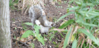 Why Counting Central Park's Squirrels Isn't Nuts