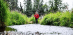 How 600,000 Pounds Of Dead Fish Affected Alaskan Trees