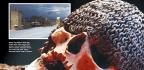 Medieval Armoured Skull