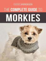 The Complete Guide to Morkies