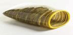 Kluge-ruhe Aboriginal Art Collection, USA