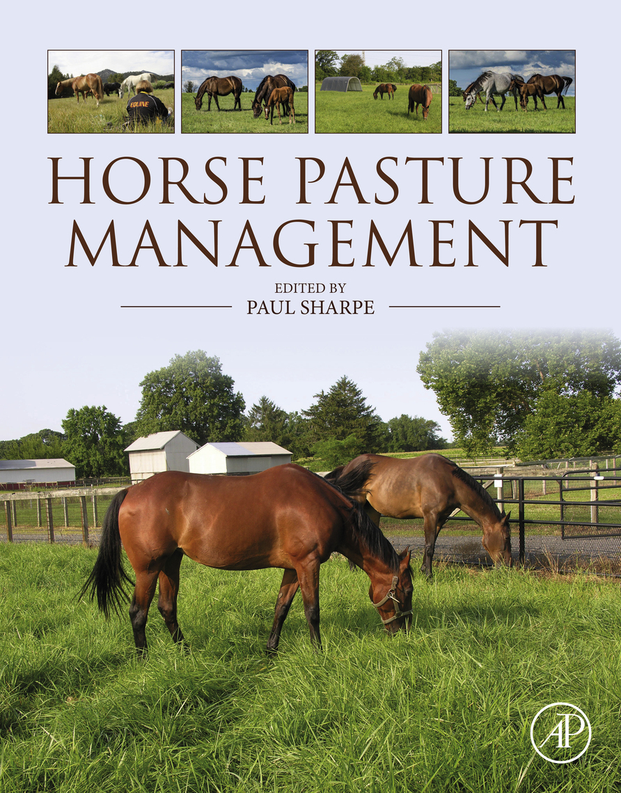 Economy Agricultural Grass Seed For Horse Pasture Grazing /& Pony Paddocks